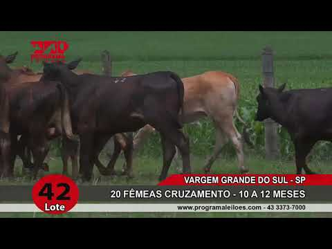 LOTE 042
