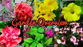 Sunday Update Garden overview. HIBISCUS, VINCAS, ROSES, RAJNIGANDHA FLOWERING AGAIN