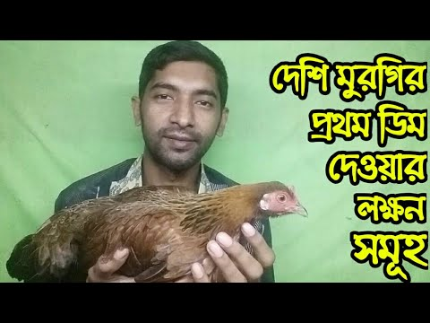 Signs Of Chicken 1st Eggs | দেশি মুরগির প্রথম ডিম দেওয়ার লক্ষণ সমূহ কি কি | Ma Deshi Murgi Khamar