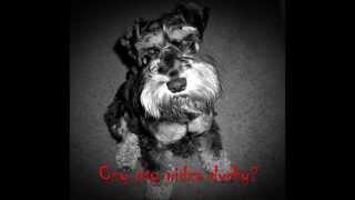 Straszne Historie na faktach - Czy psy widzą duchy?