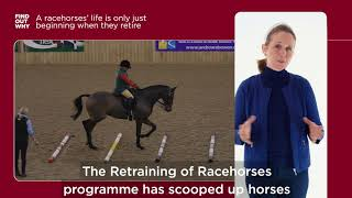 What happens to horses when the finish racing? (featuring Alice Plunkett)