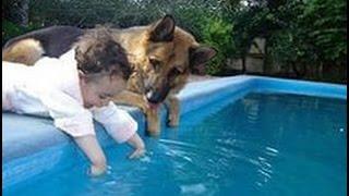 Дети и животные смешное видео. Дети и собаки