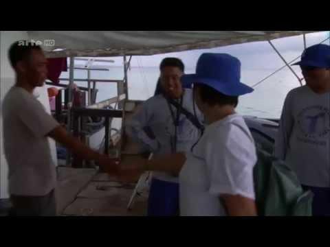 Tubbataha Reefs Natural Park, Reportage 360° Geo, ARTE HD