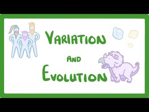 GCSE Biology - Variation and Evolution  #52