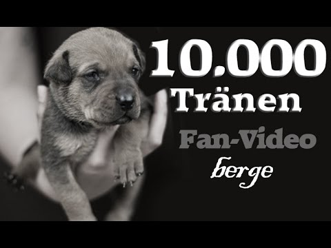 10.000 Tränen Fan-Video