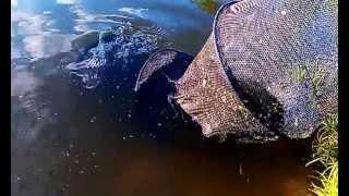 Рыбалка под Серпуховым на платном водоеме в Отрадном, близ Данки..