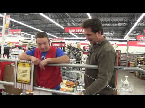 Buying Chickens at Tractor Supply