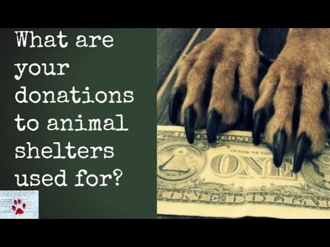 Donations to animal shelters - Where does your money go?