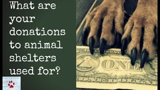 donations-to-animal-shelters-where-does-your-money-go