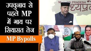 BJP vs Congress। मध्य प्रदेश में गाय को लेकर हो रही है राजनीति ।Bye-Elections | Cattle Farming