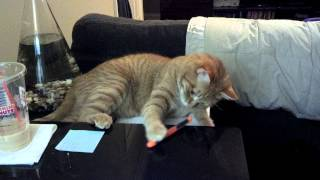 How My Cat Likes to Study