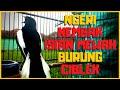 Suara Kacer Gacor Roll Speed Tembak Isian Burung Ciblek Dijamin Bagus Buat Pancingan  Mp3 - Mp4 Download