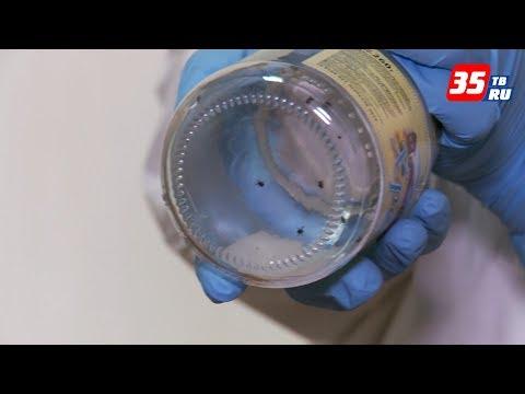 Первый в этом году случай укуса клеща зарегистрировали медики в Вологде