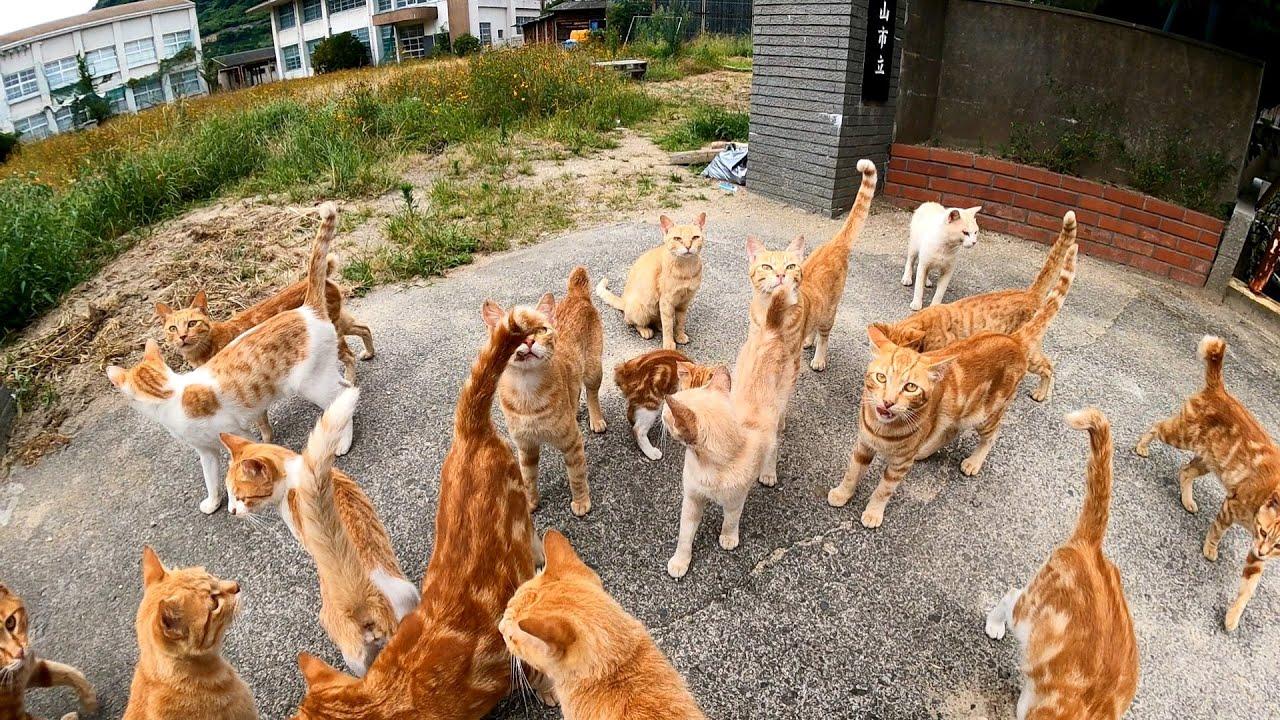 「今からユーチューブ撮影の説明をしますので猫さん達学校に集まって下さい。校庭で私が手を振ったら皆さん勢いよく私の方へ走って来て下さい」「分かったニャン」