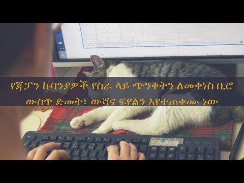 ETHIOPIA -To reduce work stress, Japan firms turn to office cats, dogs and goats