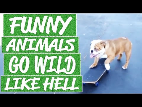 Hilarious skateboarding dog videos, cat vs hair dryer, laughing dog vine, funny cat sits on face