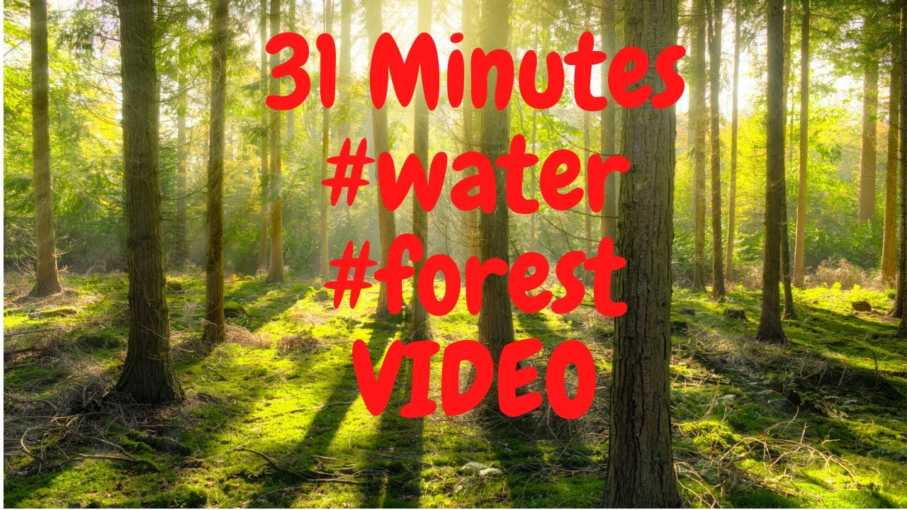 31 minutes  #relax #forest #chillout #sleep #mysticforest #spa #ambient  #relaxmusic #sleepmusic