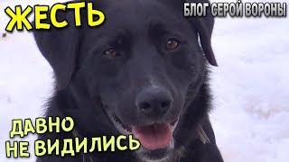 ШОК.  Собака почти год не видела хозяев.  Черный пес встречает гостей