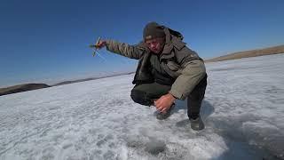 ЭТИ КАБАНЫ ПРУТ КАК ТАНКИ! рыбалка на карася весной! ловля карася на кресты