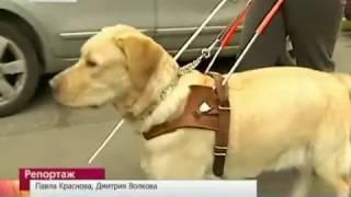 Алексей, Евгения и их собака-поводырь Черчилль.