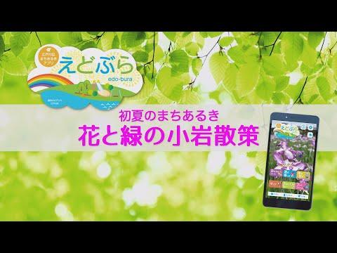 江戸川区まちあるきアプリ「えどぶら」花と緑の小岩散策