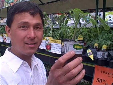 vegetable starts for 49 cents this weekend only at home depot youtube