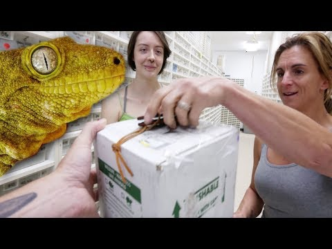 I SURPRISED HER WITH THE WORLDS LARGEST GECKO!!! | BRIAN BARCZYK