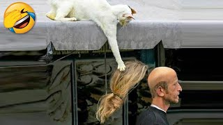The Best Funny Videos Of Dogs And Cats   Funny Animals Compilation