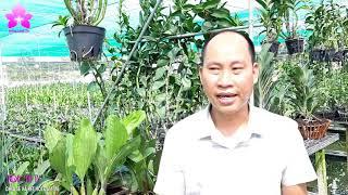 [HOALAN ORCHIDS TV] VOG Gặp Gỡ, Giao Lưu, Chia Sẻ Kinh Nghiệm Về Hoa Lan Tại Long An