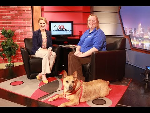 STL LIVE   Responsible Pet Ownership Dept of Health  2 of 2