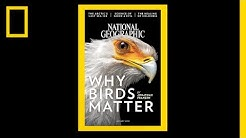 See 130 Years of National Geographic Covers in Under 2 Minutes | National Geographic