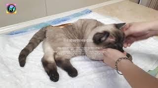 Ледяной сугроб оказался котом с переломом позвоночника травма черепа help the animal shelter