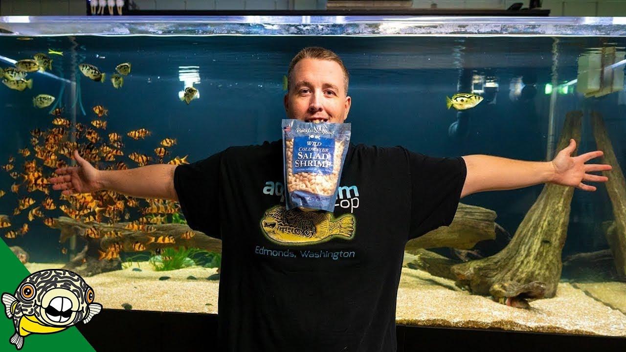 1-pound-of-salad-shrimp-for-800-gallon-aquarium