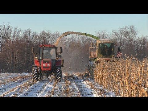 Уборка кукурузы по снегу. Второй парк гусеничных тракторов. Кировец трамбует курган