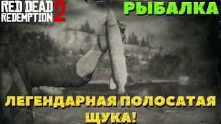 Red Dead Redemption 2 Рыбалка Легендарная полосатая щука