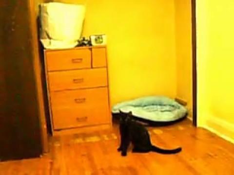 Amazingly Smart Cat Turns Off Annoying Alarm Clock