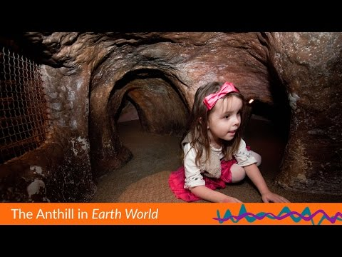 Explore the Anthill - Super Fun for all Families