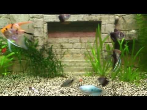 Как сделать со2 для аквариума своими руками 28