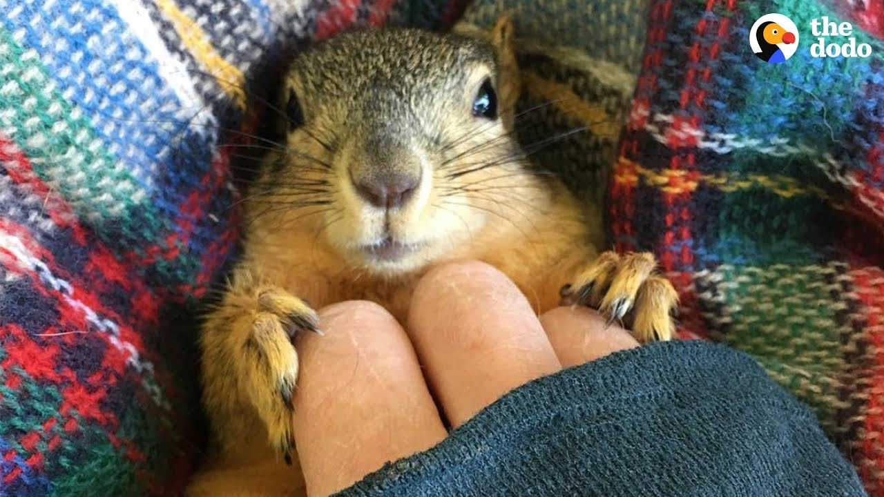 rescue squirrel asks his