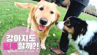 [Eng] Do Dog Get Jealous? Jealous Dog Reaction