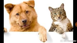 Что едят собаки,кошки,щенки,котята