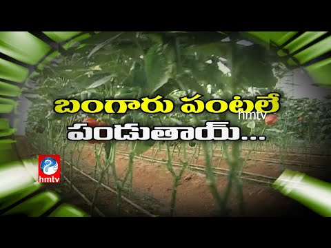 Poly-House and Green-House Farming in Nalgonda District - HMTV Ground Report