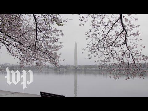 Experience the emptiness of Washington, D.C., during the coronavirus pandemic