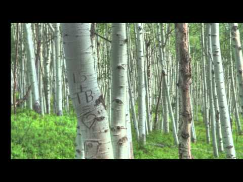 One day in Crested Butte - Jul 2010