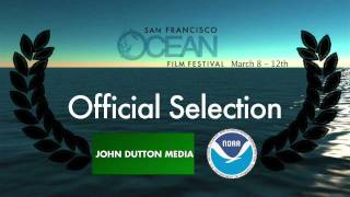 The Whale Disentanglement Network - Film Trailer