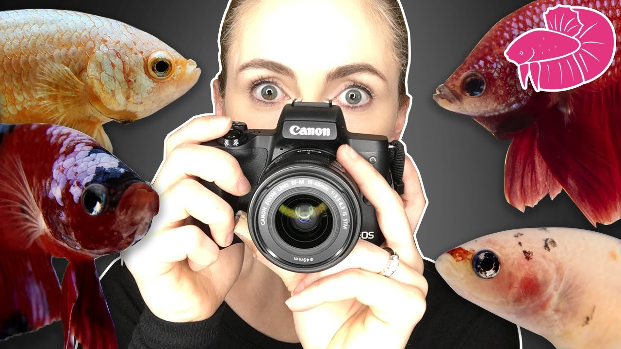 Betta Photography and Fish For Sale!