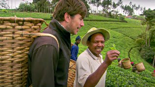 How To Pick Tea - This World: The Tea Trail With Simon Reeve - BBC