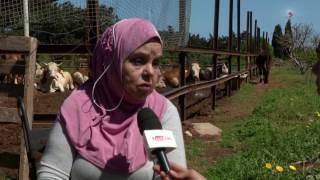 AGRICULTURE : LA TUBERCULOSE BOVINE UNE MENACE POUR LES ÉLEVEURS ALGÉRIENS