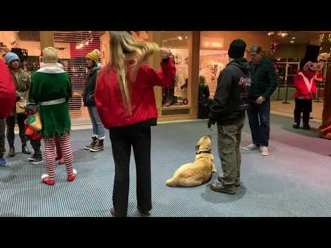 1yr Anatolian Shepherd (Oliver)   100% Off Leash w/ Distractions   Best Dog Trainers in Spokane WA