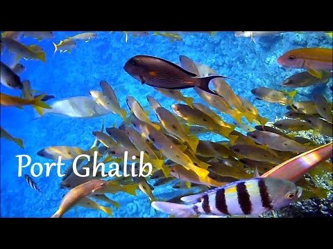 EGYPT: Red Sea snorkeling, Port Ghalib (Marsa Alam)